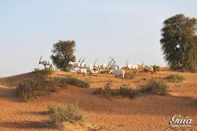 Animais no safari do deserto em Dubai