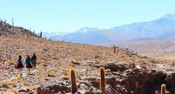 Trekking Guatin no Atacama: a trilha dos cactos gigantes
