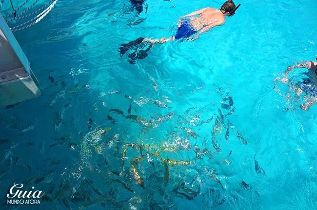 peixes-klein