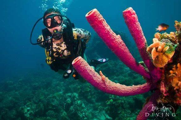 Mergulho em Curaçao: tirando a certificação PADI