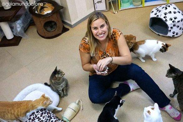 Como são os Cat Cafes no Japão? Regras e preços!