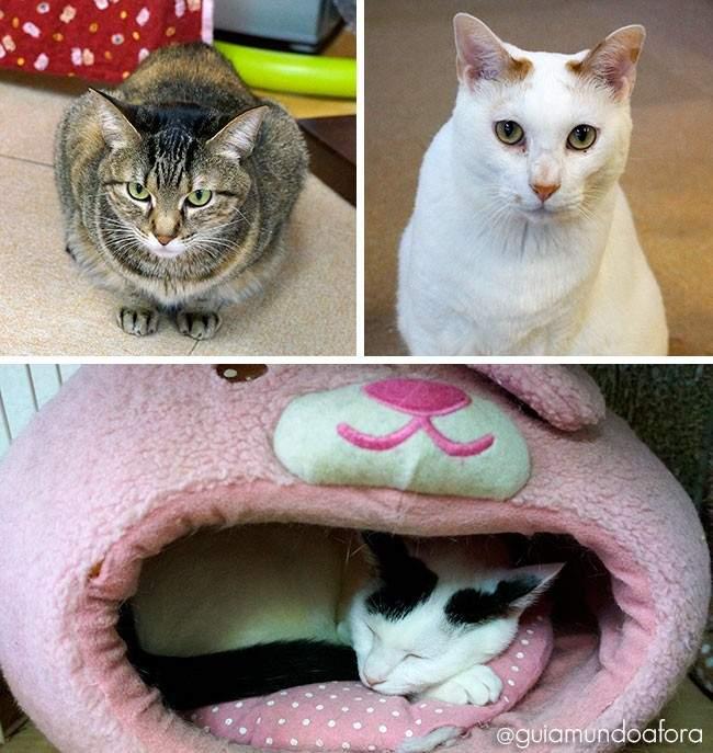 Cat Cafes Tóquio