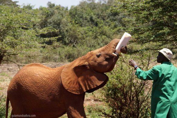 Orfanato de elefantes em Nairóbi: visite, adote, ajude!