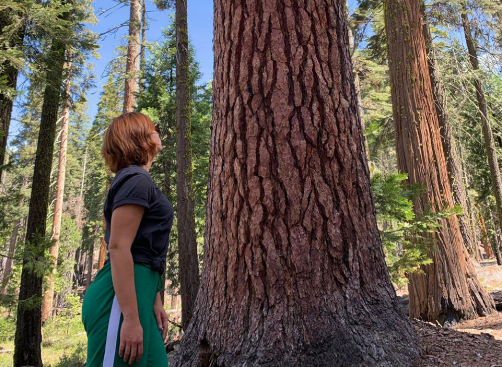 Sequoia gigante em Yosemite
