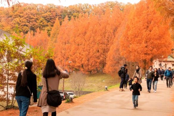 Pacote de viagem para o Japão: PROMOÇÃO 2019 com guia brasileiro